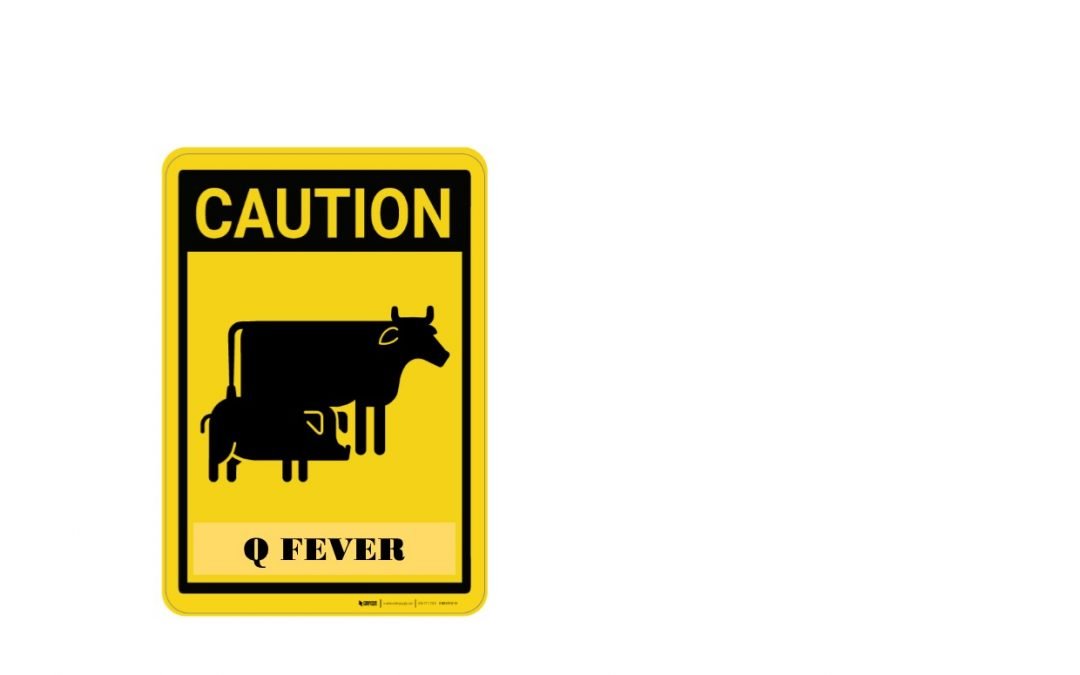 Q Fever – Are you Immunised?