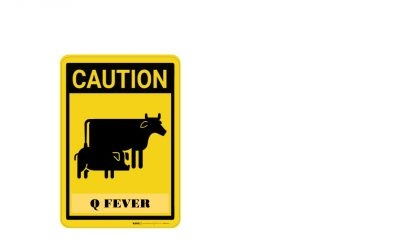 Q Fever – Are you Immunised?